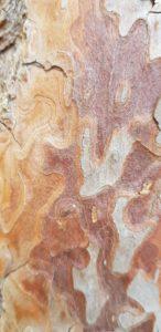 arbre sylvothérapie